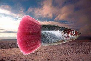 herring-tutubeach09